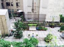Miss Vera's courtyard.